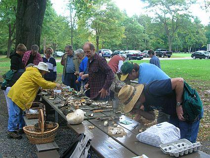 Mushroom identification table at foray